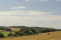 Harvest (B J Images) Tags: new old trees sky cloud tree nature field clouds landscape countryside skies buckinghamshire country mother harvest route fields hay bucks bails bail planned hs2 amershampart