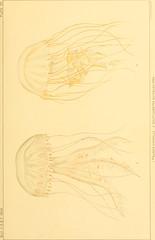 Anglų lietuvių žodynas. Žodis malacanthidae reiškia <li>malacanthidae</li> lietuviškai.