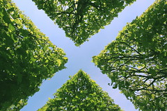 The X (Bunaro) Tags: city blue winter sky green suomi garden helsinki hedge talvi gaze puutarha talvipuutarha yokfeed