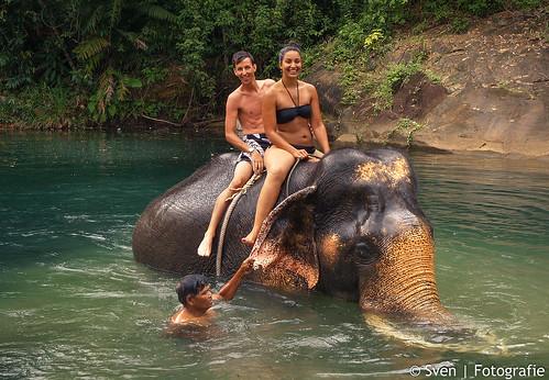 Ko Dan, de olifant