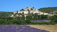 Provenza - Banon 4 (antoniobusso) Tags: france nature landscape miel provence lavande francia paesaggi provenza lavanda lavandin