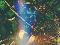 agarrada de los pies a la naturaleza  -vibramos el cambio y caminamos con sus pasos- (Gabriela Rosell grfica-foto-mente) Tags: life travel viaje flowers feet nature flow poetry joy journey enjoy felicidad lightness carpediem happyness lightnessofbeing disfrutar levedad everythingisconnected lifeisart fluir everythingisconected todoestconectado