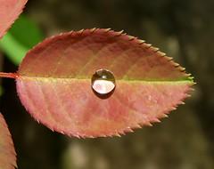 Nature's eye...