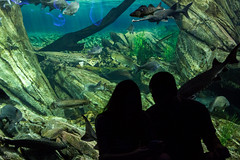 Say Something. (Matt Zhang Photography (MZP)) Tags: ocean life shadow sea vacation urban fish toronto black water canon photography eos rebel aquarium photo couple tank under silhouettes ripleys lif