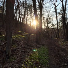 1 May 2014 (Rob Rocke) Tags: trees plants spring woods shadows trails sunsets growth lensflare flare paths indianhead eastrockpark nhv instagram gscia