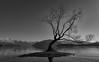 That Tree (_Scorps_) Tags: newzealand lake tree water island blackwhite famous southisland wanaka thattree copyrightpaulwutzke mostphotographedtree