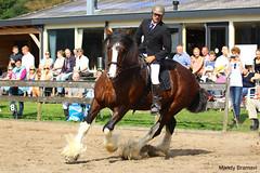IMG_4173-k (Mandy Bramavi) Tags: show horse shire