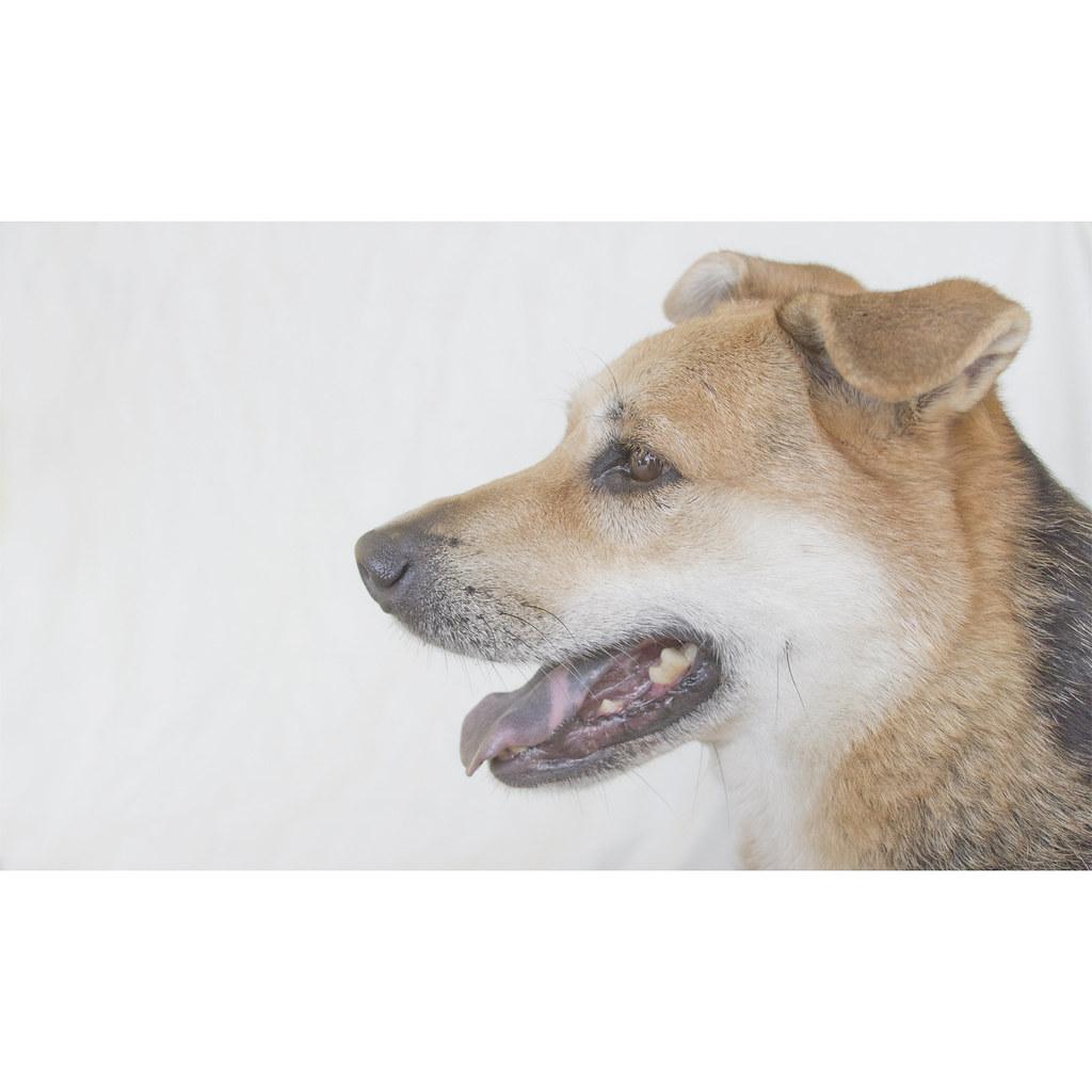 Petsmart Tucson Dog Adoption