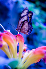 untitled butterfly shot (Real Cowboys Drive Cadillacs) Tags: blue white abstract black color macro art nature butterfly insect photography photo nikon raw texas unitedstates photos bokeh colorphotography magenta butterflies houston micro leadinglines nikond7000