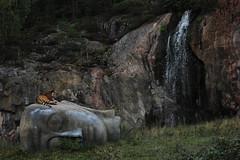 Unedited paradise (FlyBright) Tags: park animals canon landscape eos zoo monkey paradise chimp zoom sweden tiger nophotoshop siberian distance tamron norrkping gibbon unedited t3i telezoom zoopark 70300 kolmrden 600d