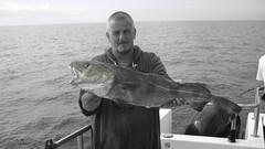 "Alderney Trip - Gary Wylde's 11lb Cod • <a style=""font-size:0.8em;"" href=""http://www.flickr.com/photos/113772263@N05/15184031231/"" target=""_blank"">View on Flickr</a>"