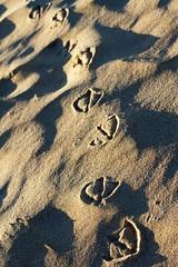 l assenza del gabbiano (aubergina) Tags: beach portugal 50mm sand shadows lagos unterwegs minimalism imprint vogelperspektive canon7d holiday2014