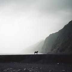 shadow of the past (Tom Kondrat) Tags: shadow sea dog mountain 120 6x6 film silhouette mediumformat frank stones taiwan before analogue mamiya6 gui typhoon kodakportra160 tom5 matmo typhoonblues