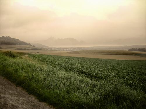 Neufchâtel-en-Bray - Aulage