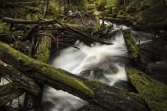 Tangled Below (Derek_Flynn) Tags: light nature water beautiful forest landscape moss exposure chaos natural northern deadfall