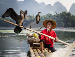 Oar dance (lc99 photography) Tags: oar dance birds fly wings fisherman cormorantfisherman cormorantfishing fishing raft river travel china cormorant bambooraft mountain karst karstformation xingping guangxi guilin man oldman portrait person sunset lijiang liriver cormorants mountains water bamboo 模特兒