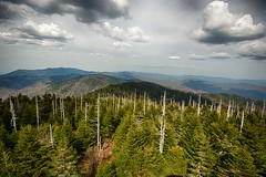 Don't be afraid its only business! The aftermath of acid rain in Great Smoky Mountains, TN, USA (The Shared Experience) Tags: greatsmokymountains tn usa d800 summer acidrain pollution 2014 epa environmentalist treehugger