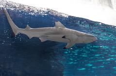 サメ 水族館 神戸 須磨海浜水族園 aquarium fish shark