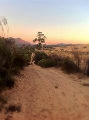 Dreaming (Some Strange Lady) Tags: ways sunset path farm countryside sliderssunday ipad walk ride
