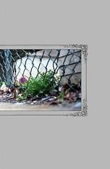 Wiegand_Thumbelina2014-Cover (rosiewiegand) Tags: thumbelina fairytale fairytalephotography compositephotography photoshop film mediumformatfilm colorfilm comicbook graphicnovel photographicnovel photocomicbook hanschristianandersen modernfairytale grimmsfairytales northphilly northphiladelphia philadelphia digitalart digitalmanipulation photocomposite photobook storybook digitalillustration digitalediting digitalphotography book bookdesign comicbookdesign comicbookillustration graphicnovelillustration graphicnoveldesign