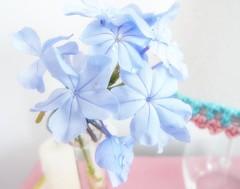 HOME SWEET HOME (toyaguerrero) Tags: plasencia bedroom dormitorio airbnb extremadura cáceres spain toyaguerrero maríavictoriaguerrerocatalán flower flor bedsidetable plumbago indigo