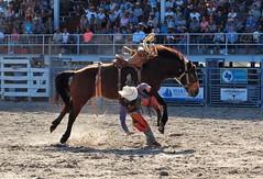 P3110187 (David W. Burrows) Tags: cowboys cowgirls horses cattle bullriding saddlebronc cowboy boots ranch florida ranching children girls boys hats clown bullfighters bullfighting