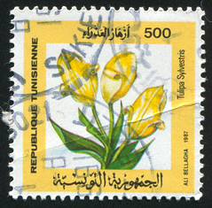 Tunisia 0040 m (roook76) Tags: old plant flower nature floral beautiful beauty vintage botanical stem ancient flora message mail natural blossom tunisia antique 1987 postcard historic retro stamp petal seal envelope bloom letter florist aged botany postage tulipa postmark philately sylvestris