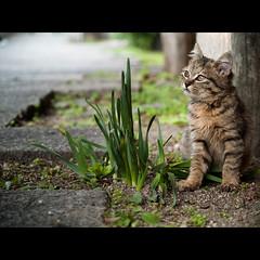(Masahiro Makino) Tags: japan digital cat photoshop kitten kyoto olympus adobe  stray  zuiko lightroom e500 1454mm f2835 20071115145623e500ls640p