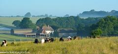 all quiet on the farm (The Urban Adventure) Tags: sky sun mist fog clouds sunrise countryside kent nikon sigma lowepro northdownsway 10mm sunrising shepherdswell d7100