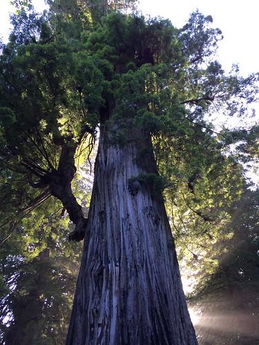Sonnenspiel vor dem größten Baum des Parks