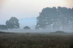 Misty-02-10-11-_0027 (Ben Grader) Tags: morning england sky panorama terrain mist tree field grass landscape bush view sony scene hedge vista moor tamron bushes prospect vapour clevedon moorland wessex somersetshire slta55