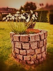Gartenarchitektur (mheckerle) Tags: flowers flower blossom eifel blume chor wandern monschau blueten blten bluete 2014 hitstaaner