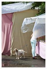 (Roberto Alarcon) Tags: shadow party dog tree verde azul person vendedor nikon fiesta rosa perro esquina rbol amo seller vigo fuegos artificiales correa ruido turquesa alarcon d610 atado ambulante puesto tenderete bouzas robertoalarcon