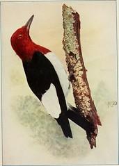 Anglų lietuvių žodynas. Žodis red worm reiškia raudonas kirminas lietuviškai.