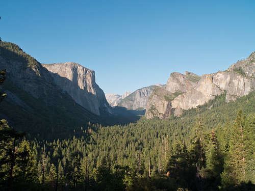 Wald und El Capitan