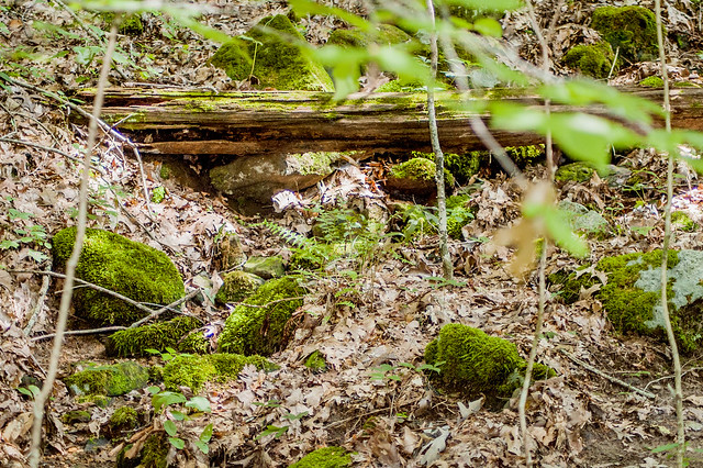 Tank Spring Nature Preserve - August 3, 2014
