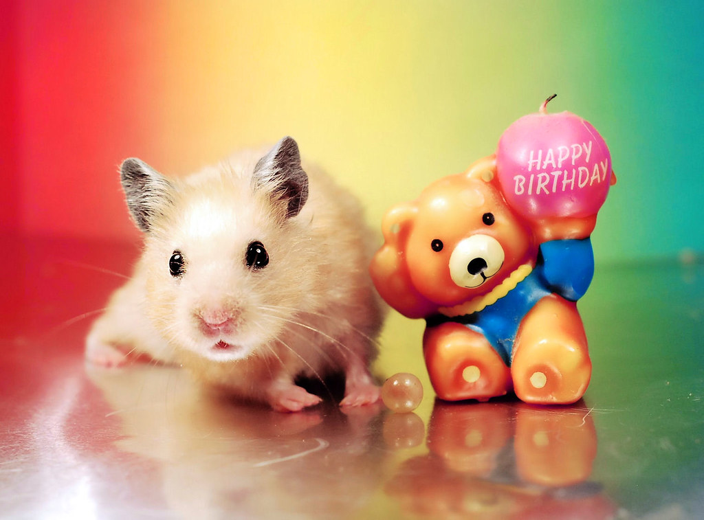 The Worlds Best Photos Of Hamster And Happy Flickr Hive Mind