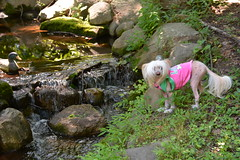 "LuLu Near The Little Waterfall • <a style=""font-size:0.8em;"" href=""http://www.flickr.com/photos/96196263@N07/14713307378/"" target=""_blank"">View on Flickr</a>"