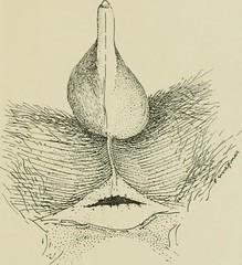 Anglų lietuvių žodynas. Žodis functional anatomy reiškia funkcinė anatomija lietuviškai.