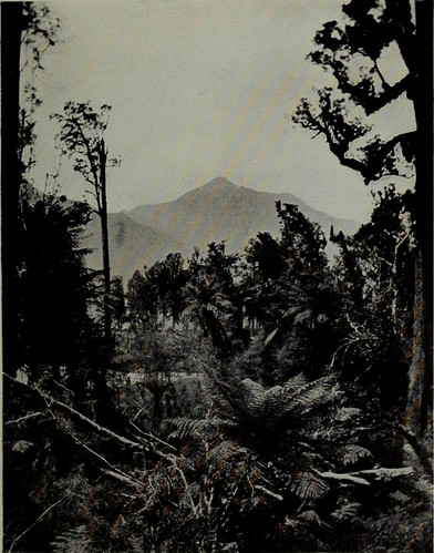"Image from page 92 of ""Through south Westland, a journey to the Haast and Mount Aspiring, New Zealand"" (1911)"