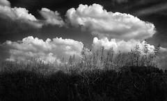 #14 (UBU ♛) Tags: blackwhite noiretblanc blues biancoenero blunotte blupolvere ©ubu blutristezza unamusicaintesta landscapeinblues luciombreepiccolicristalli