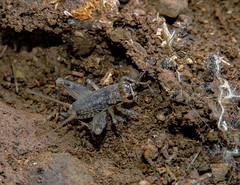 Curious About Crickets (Bonnie Ott) Tags: westvirginia lewisburg campalleghany greenbrierriver campalleghanyforgirls