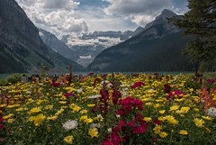 Splash of Color (dbushue) Tags: flowers lake canada mountains nature landscape nikon glacier alberta lakelouise banffnationalpark canadianrockies 2014 victoriaglacier fairmontchateau dailynaturetnc14