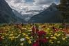 Splash of Color (dbushue) Tags: flowers lake canada mountains nature landscape nikon glacier alberta lakelouise banffnationalpark canadianrockies 2014 victoriaglacier fairmontchateau dailynaturetnc14