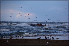 Scheveningen, The Netherlands 20-08-2014  (1) (Dr.TRX) Tags: sea rescue water netherlands rain weather by strand boat zonsondergang sand wind dusk scheveningen nederland wolken zee beached whale nl sar walvis drt weer the knrm nld gestrand drtrx