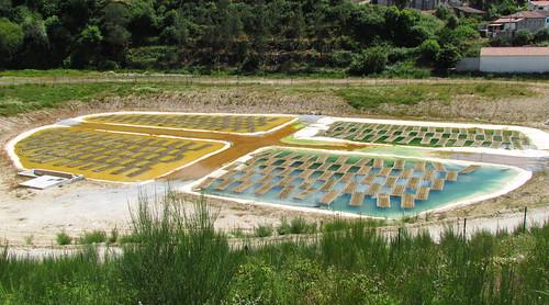plant water mine uranium phytoremediation treatment hydroponic contaminated minewater heavymetals cunhabaixa