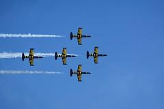 Bees (tamson66) Tags: aircraft bees baltic airshow albatros l39