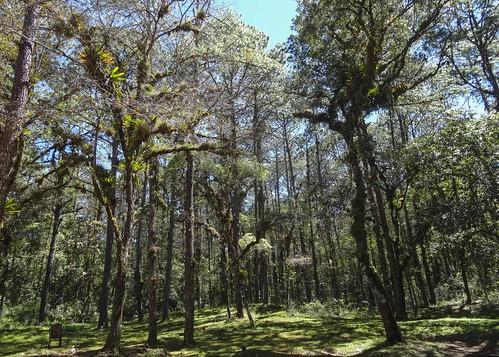 Lagunas De Montebello DSC01858focPr