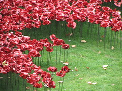 UK - London - Tower of London - 'Blood Swept Lands and Seas of Red' art installation - Poppies (JulesFoto) Tags: uk england london wwi publicart moat toweroflondon bloodsweptlandsandseasofred ceramicpoppies