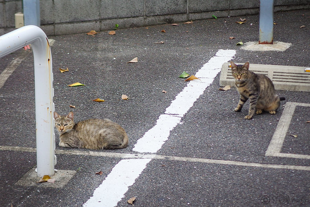 Today's Cat@2014-09-03